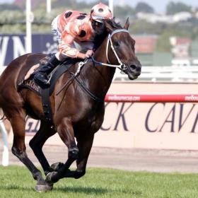 Black Caviar wins the Lightning Stakes