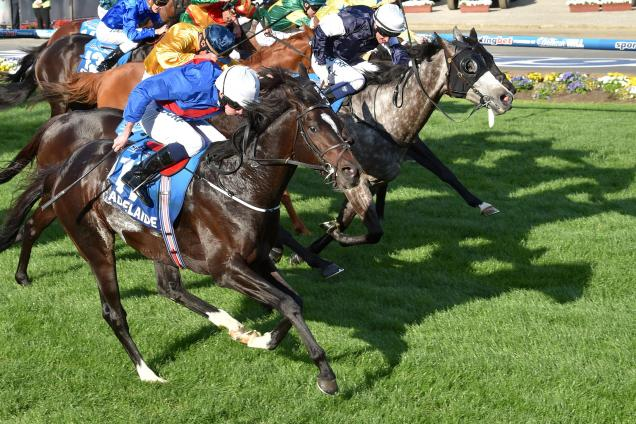 Cox Plate - Talking points & horses to follow