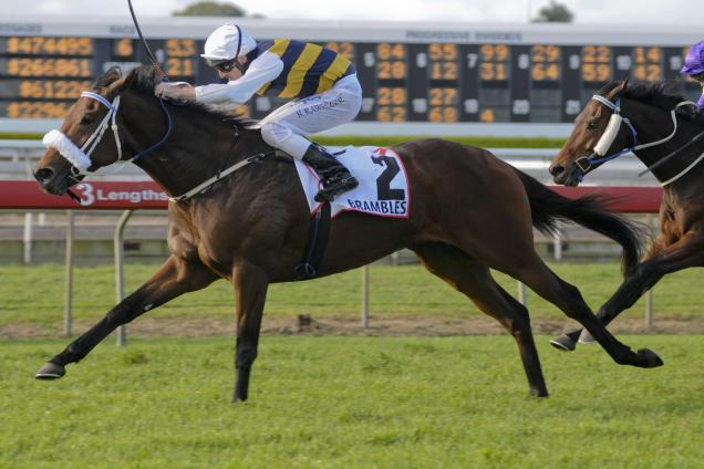 Group One stayer retired