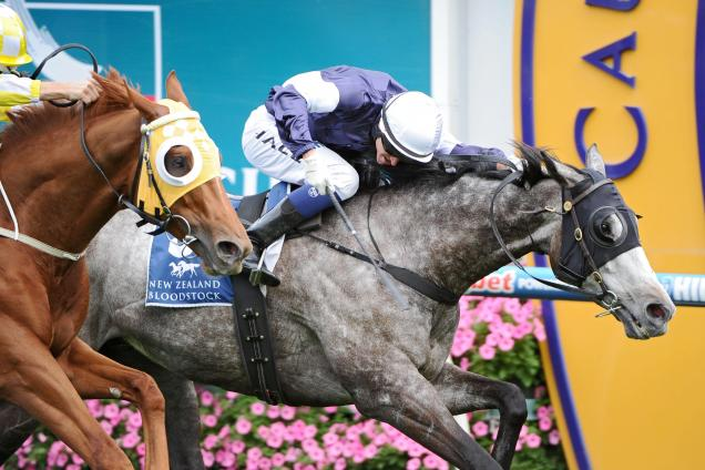 Cox Plate preview