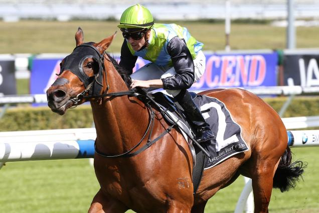 Randwick - Talking points and horses to follow