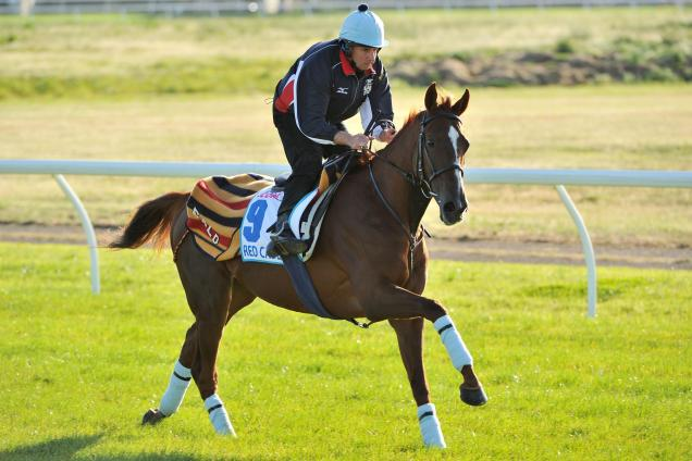 Red Cadeaux back for fourth shot at Cup