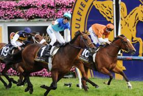 Rising Romance was huge in defeat in the Caulfield Cup