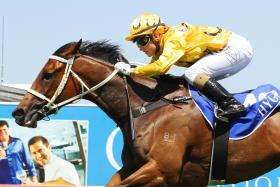 Tegan Harrison boots home Sammi Jain at the Gold Coast