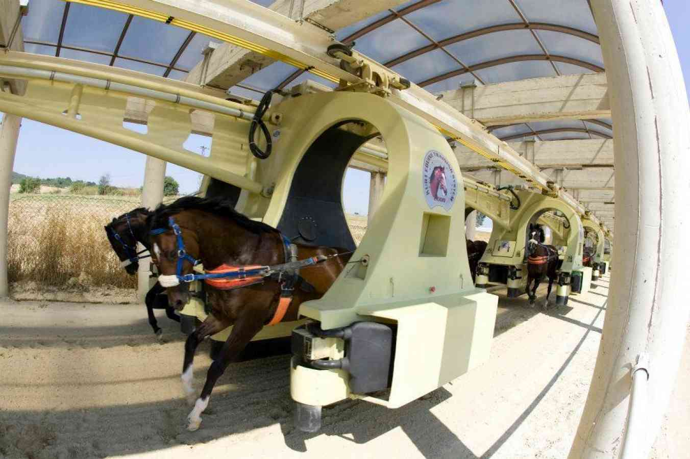 horse training machine