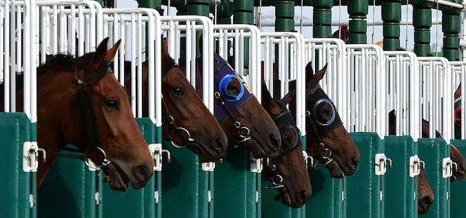 Melbourne Cup Scratchings 2016