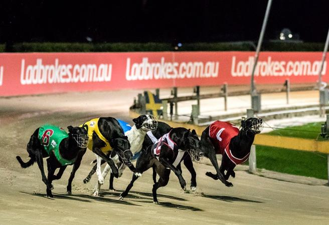 Greyhound trainer DQ'd for six years