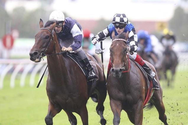Big Duke | Horse Profile, Form Guide & Latest Odds