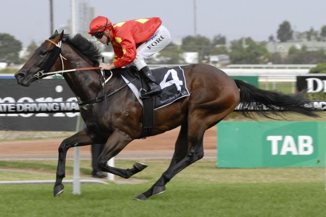 Happy Galaxy Horse Profile Form Guide Latest Odds