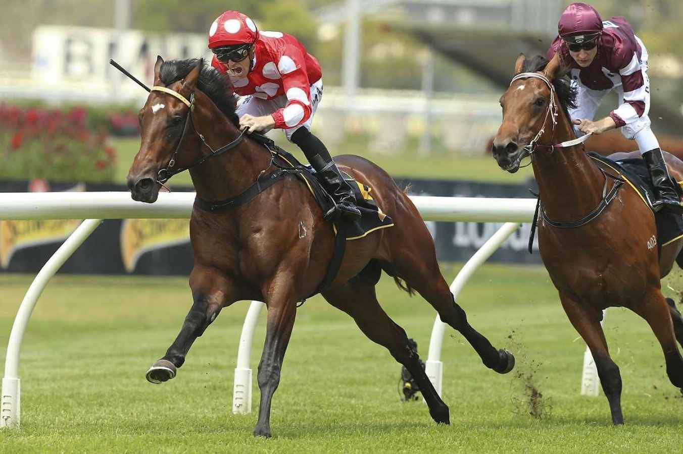rosehill races saturday form guide