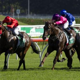 how to run amelbourne cup sweep