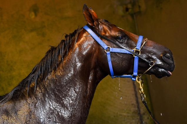 Protectionist Horse