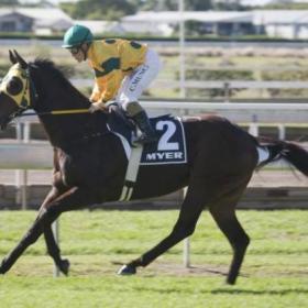 Secrets Untold | Horse Profile, Form Guide & Latest Odds