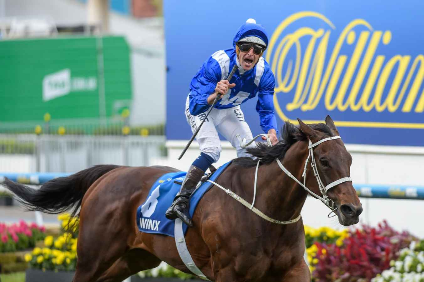 Winx blows them away in the Cox Plate