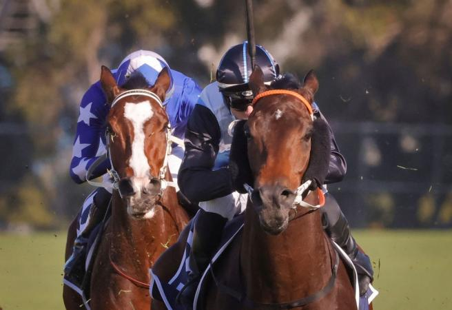 Racing: Saturday Selections - Randwick Winter Stakes Day