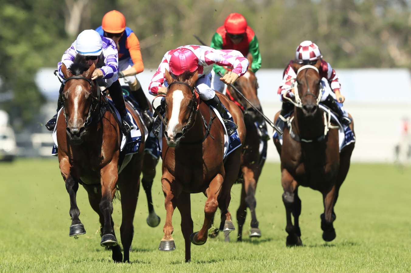 Champagne Cuddles claims biggest victory