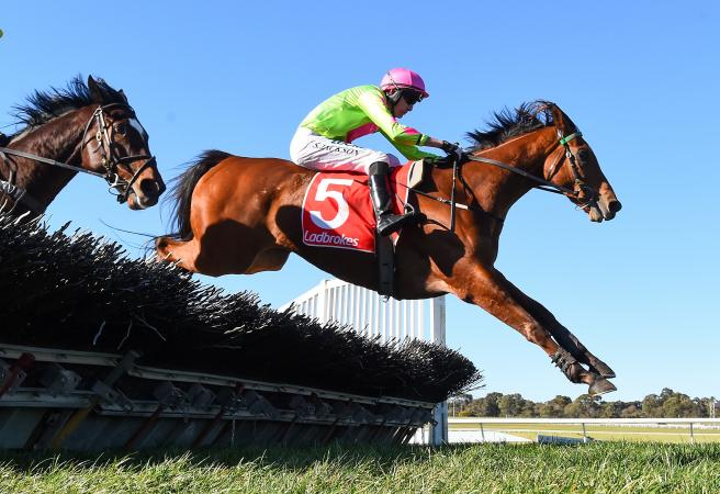 Cougar Express races to GN Hurdle success