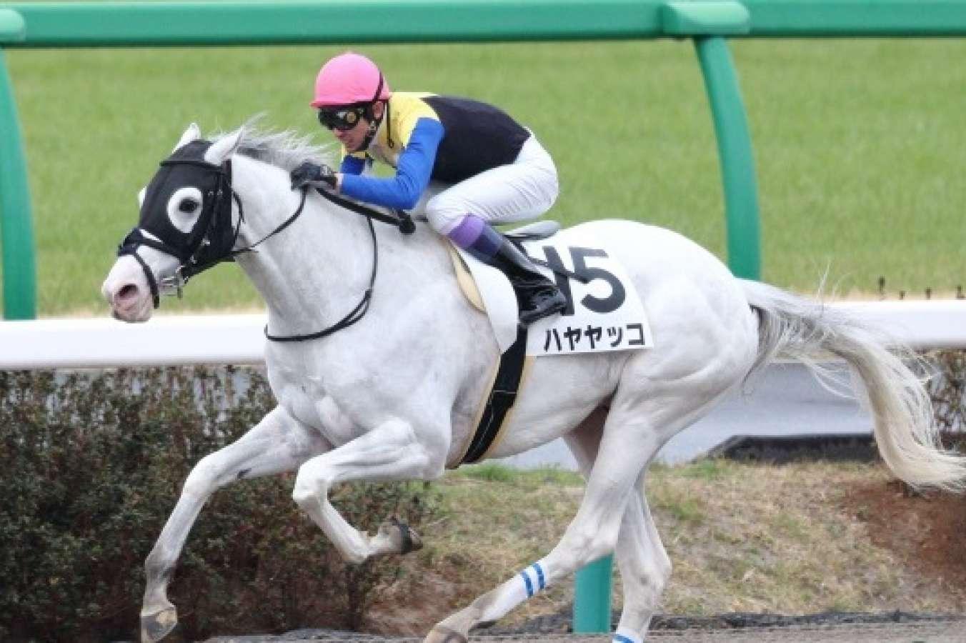 White Horse Wins Japan G3