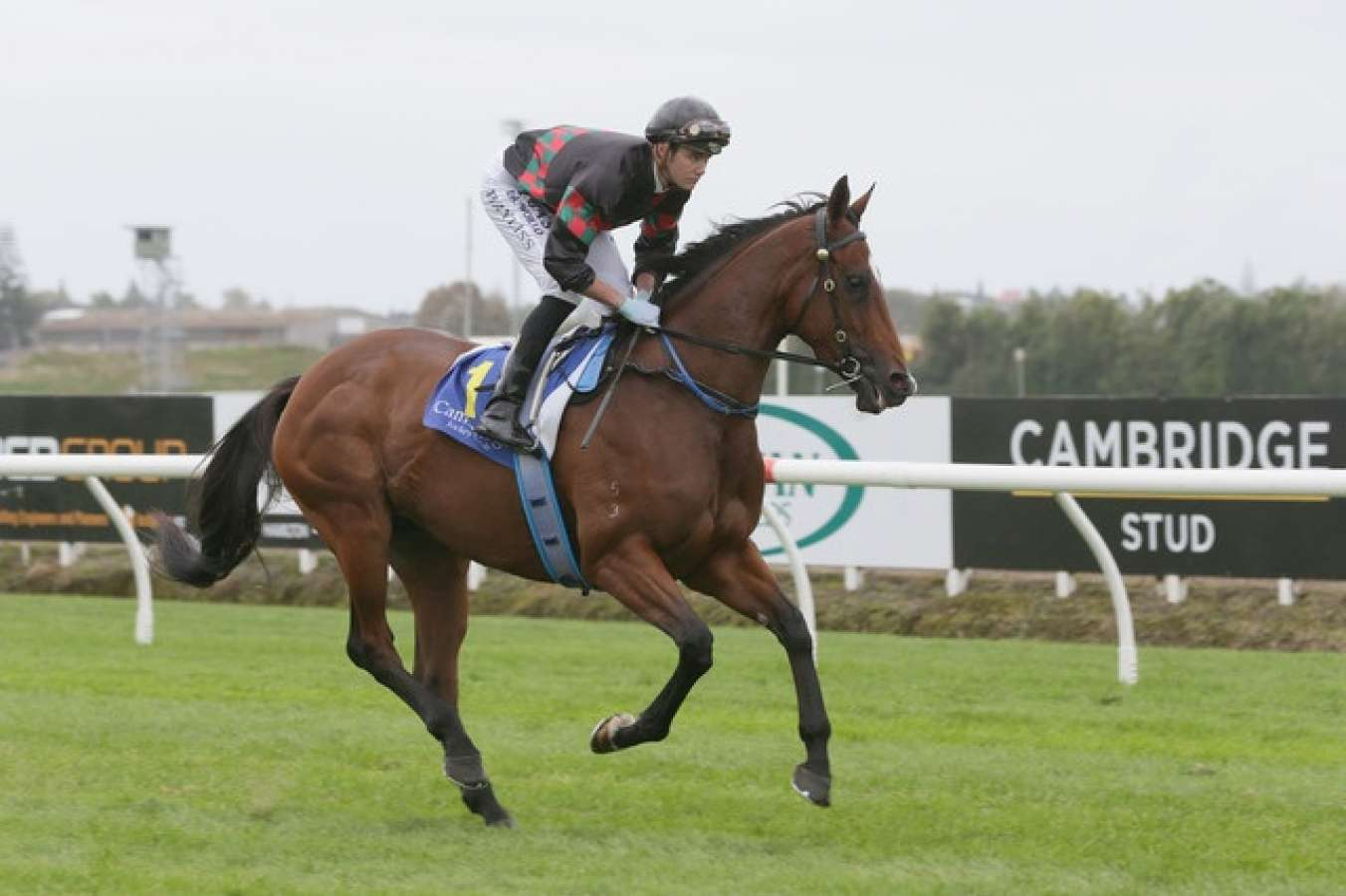 Bayliss back home with G1 opportunity
