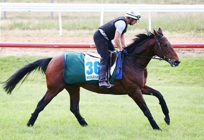 Marmelo back for another crack at Melbourne Cup