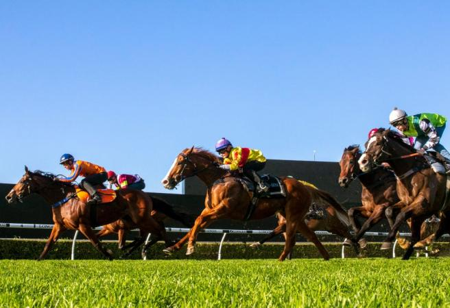 Racing: Saturday Selections - Tancred Stakes Day