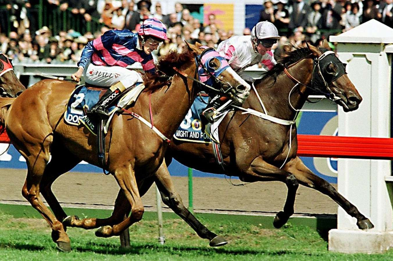 Champion racehorse Might And Power dies aged 26