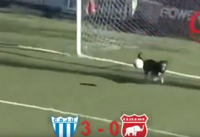 Every Dog has his day.... in goal