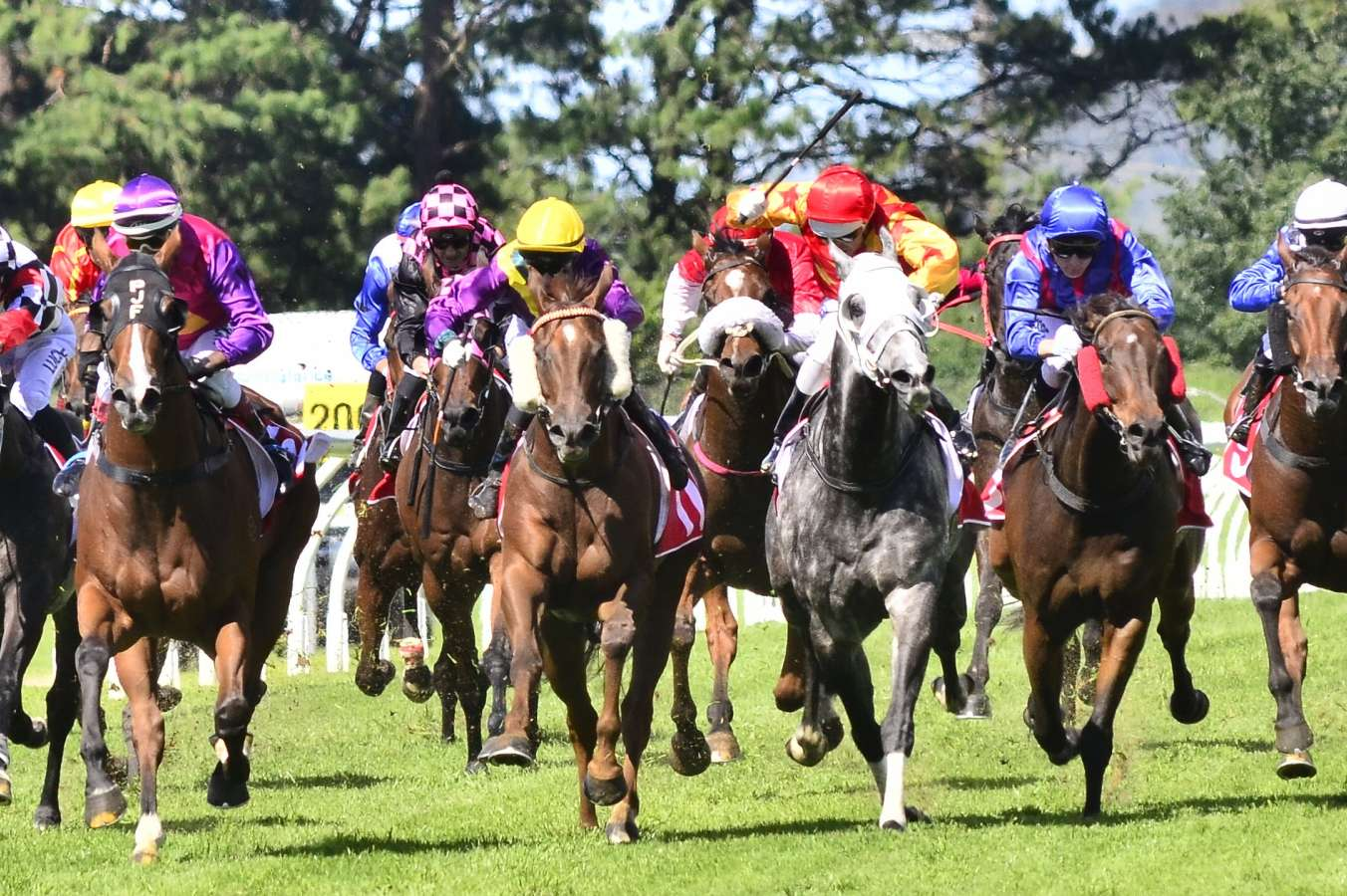 Toowoomba preview and tips: November 25