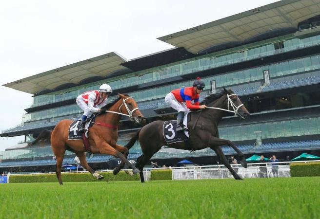 Verry Elleegant and Nature Strip head Randwick features