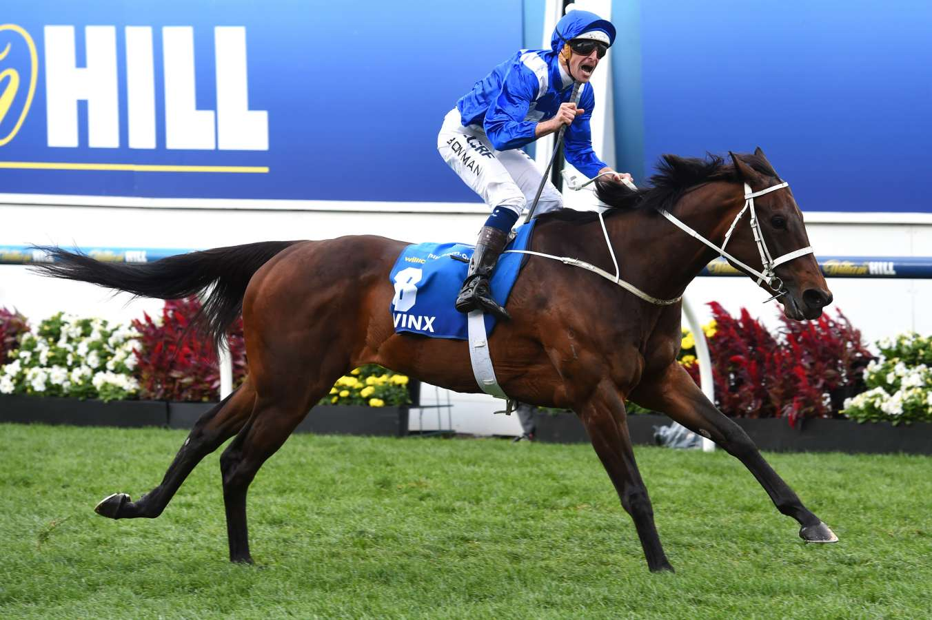 Superstar Winx Nominated For The 2017 Japan Cup